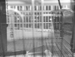 Consumerism | Silver Gelatin Darkroom Print | 8x10'' Paper | Matte Finish | $20.00 + Shipping